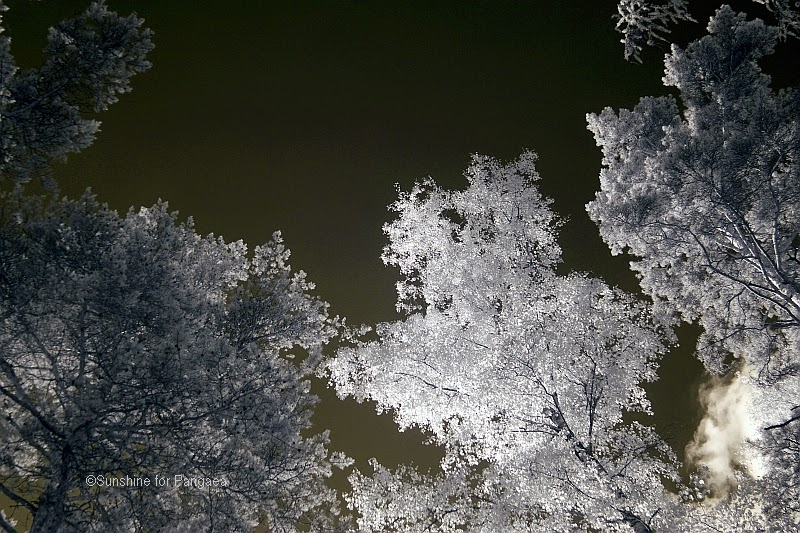 tree and the sky in infrared light