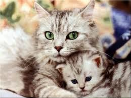 Como darle remedio a un Gato