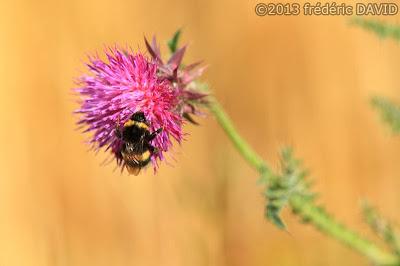campagne macro nature insecte été seine et marne
