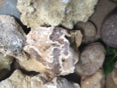Las piedras de Casa de Piedra ( La Pampa)