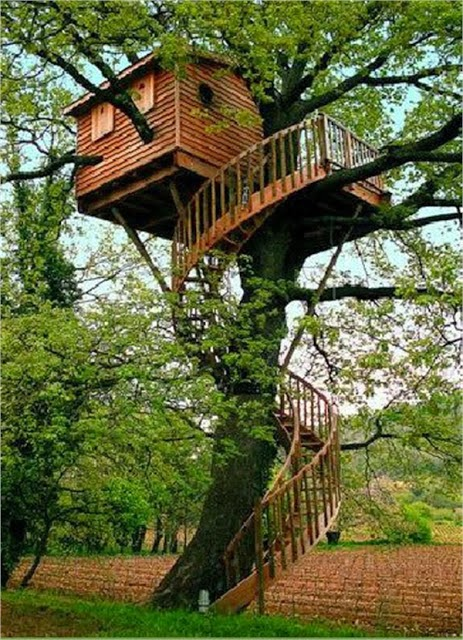 Mindblowing planet earth world 39 s best tree house - Casas de madera en arboles ...