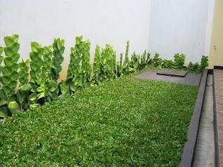 Kerapian tanaman hasil kesungguhan perawatnya