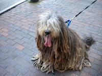 Dog 2BDays 2B2011 2B003