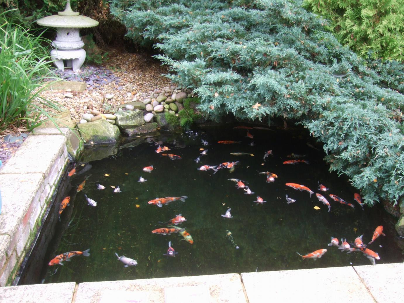 Alternative eden exotic garden autumn at avenue fisheries for Fish pond specialists