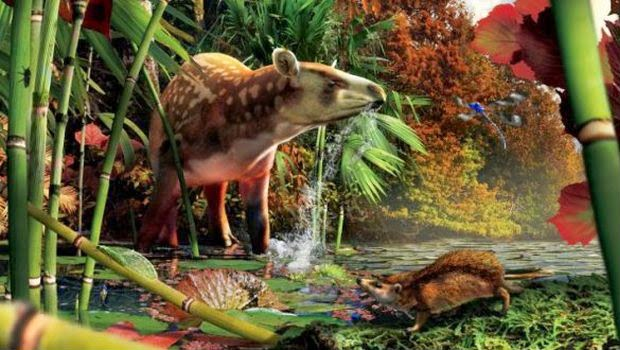 Arkeologi Berhasil Menemukan Fosil Tapir pada Zaman 52 Juta Tahun Silam