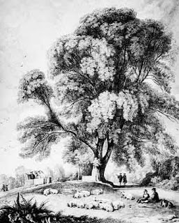 Melukis dan Mewarna Pokok