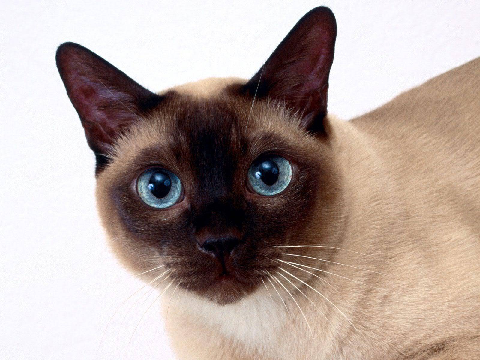 gatos de argentina: