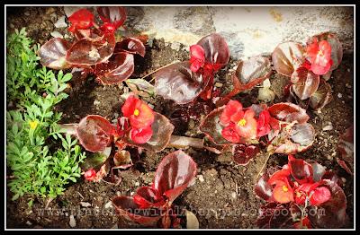 Coeur d'Alene public library flowers