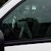 Buldogue é deixado em carro e aperta buzina sem parar