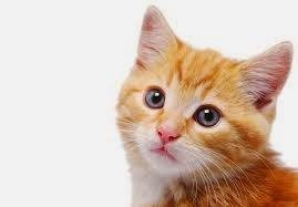Maafkan aku kucing...