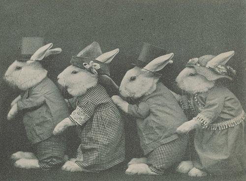 [Image: bunnies+in+a+row.jpg]
