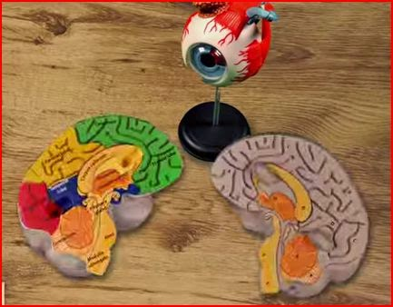 TED-Ed optical illusions animatedfilmreviews.filminspector.com
