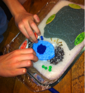 how to make a plant cell model using recycled materials