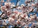 Tavaszra várva....
