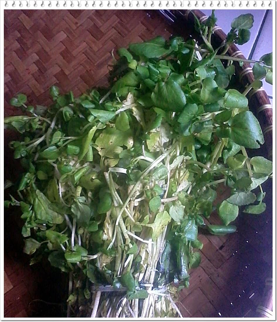 Manfaat sayuran selada air
