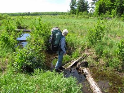 crossing creek on log