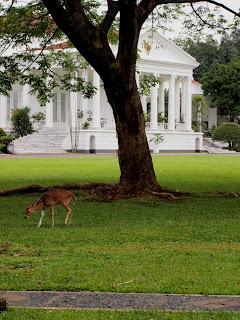 Bogor Palace, Bogor Botanical Garden