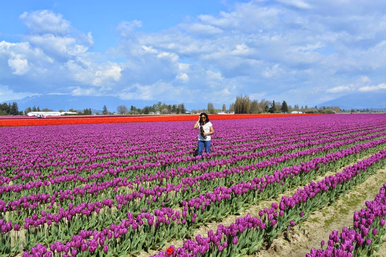 Image result for Why Visit Seattle in the Spring
