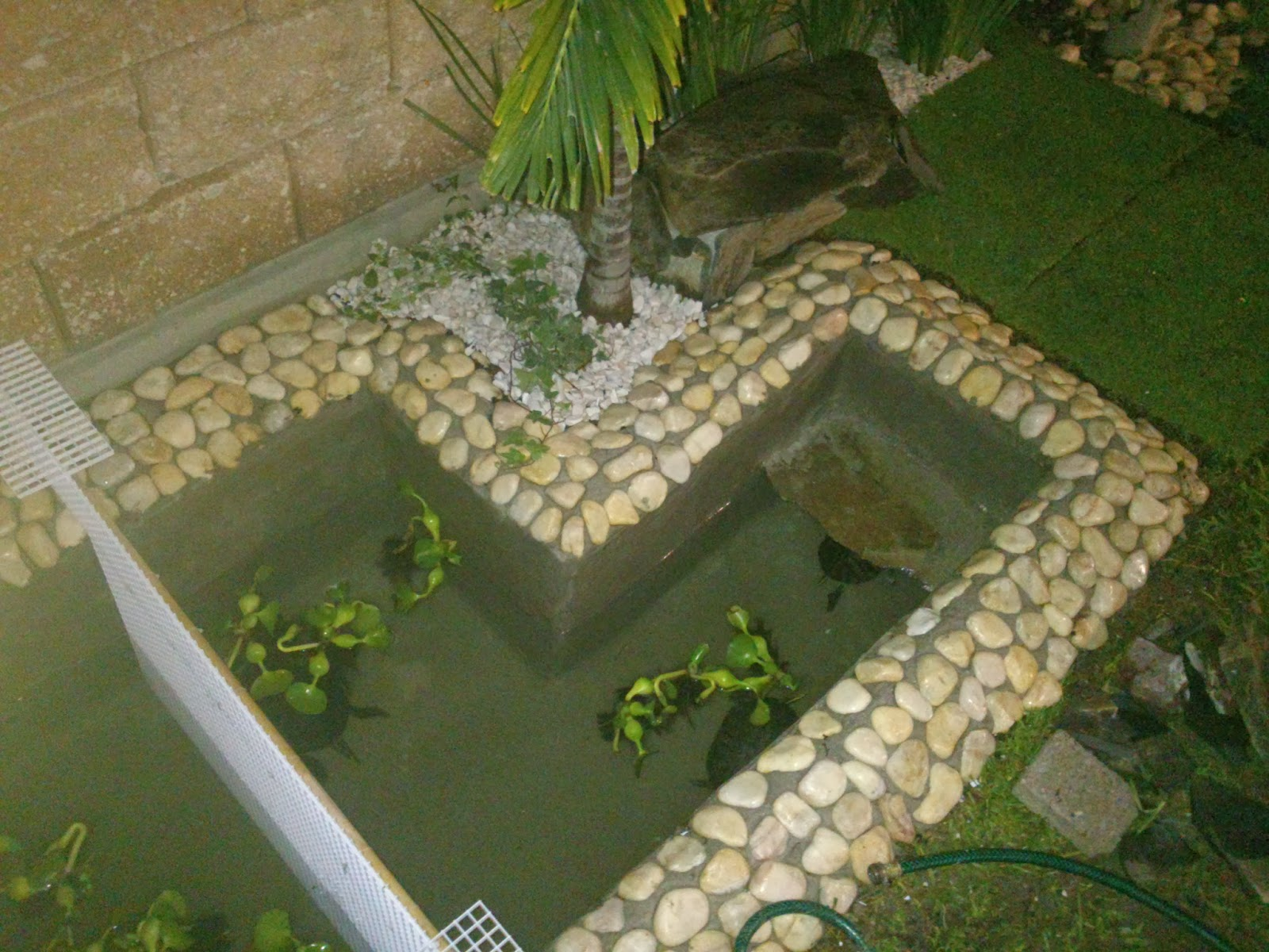 El estanque de mis tortugas diciembre 2013 - Como construir un estanque para tortugas ...