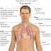 Side Effects of Cocaine Abuse on Health