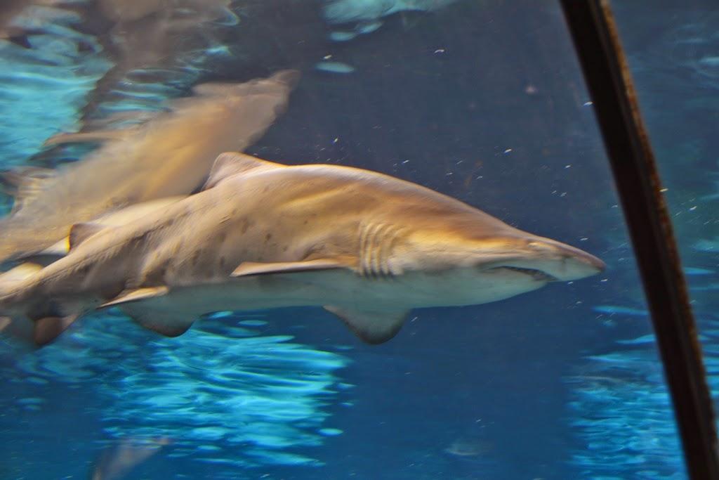 Barcelona Aquarium shark