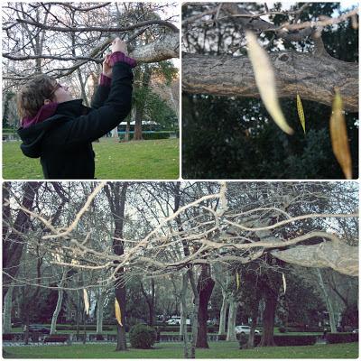Colgar hojas en arbol caduco