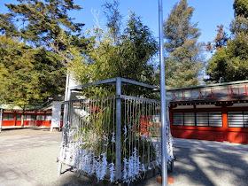 大国魂神社の矢竹