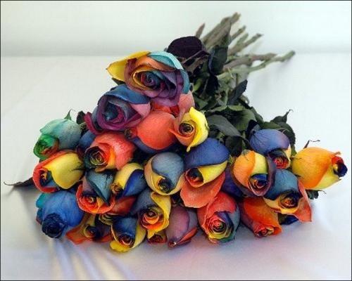 5 'قوس قزح' من أجمل الزهور التي قد تراها   حقن الزهور بصبغات مختلفة