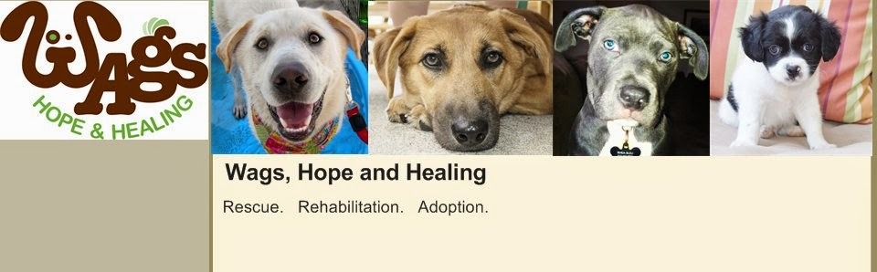 Amplify Austin: Wags, Hope and Healing
