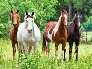 Konji životinje download besplatne pozadine slike za mobitele