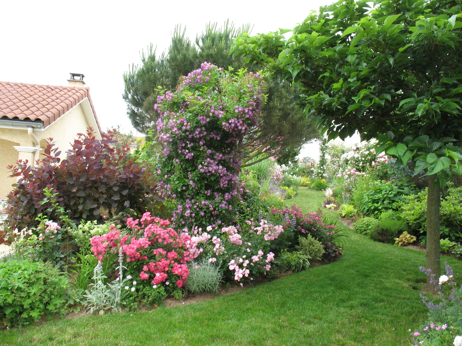 Roses du jardin ch neland rosier robin hood for Fleurir son jardin