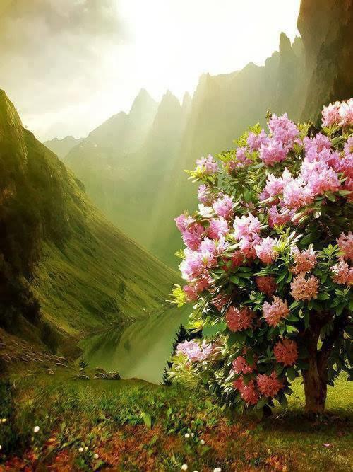 so lovely natural wallpaper