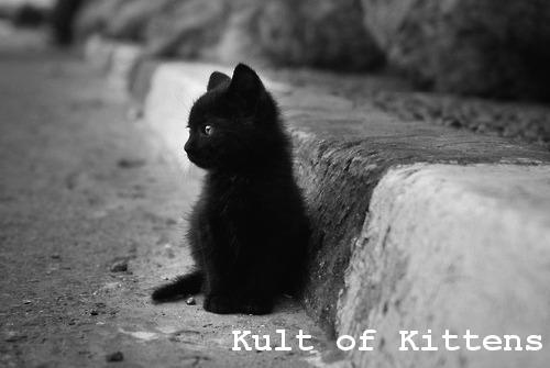 Kult of Kittens