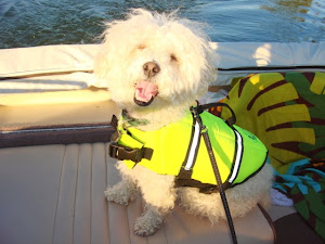 Poppy (Now Mopsy Topsy) is thrilled to go on boats