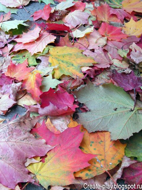 листья клена осенью
