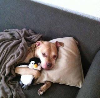 Anjing memeluk boneka pinguin
