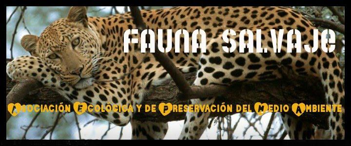 Fauna Salvaje