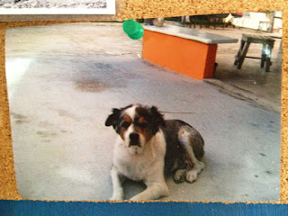 A photo of a photo of Foster from the El Milagro palapa's bulletin board