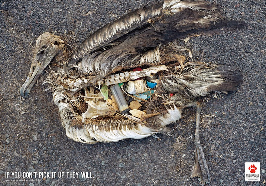 40 Of The Most Powerful Social Issue Ads That'll Make You Stop And Think - Bird Conservation: If You Don't Pick It Up They Will