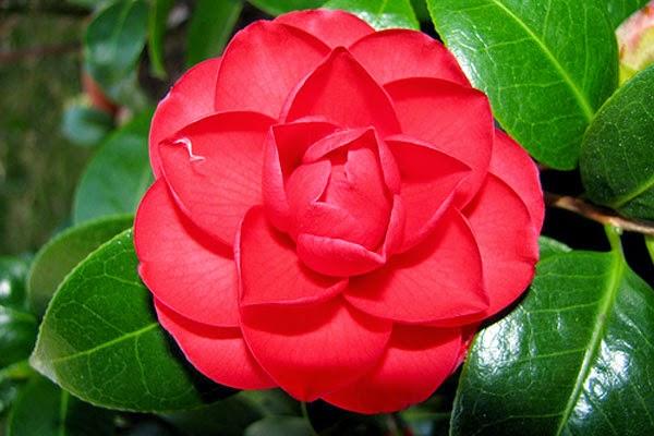 Мира цветок фото
