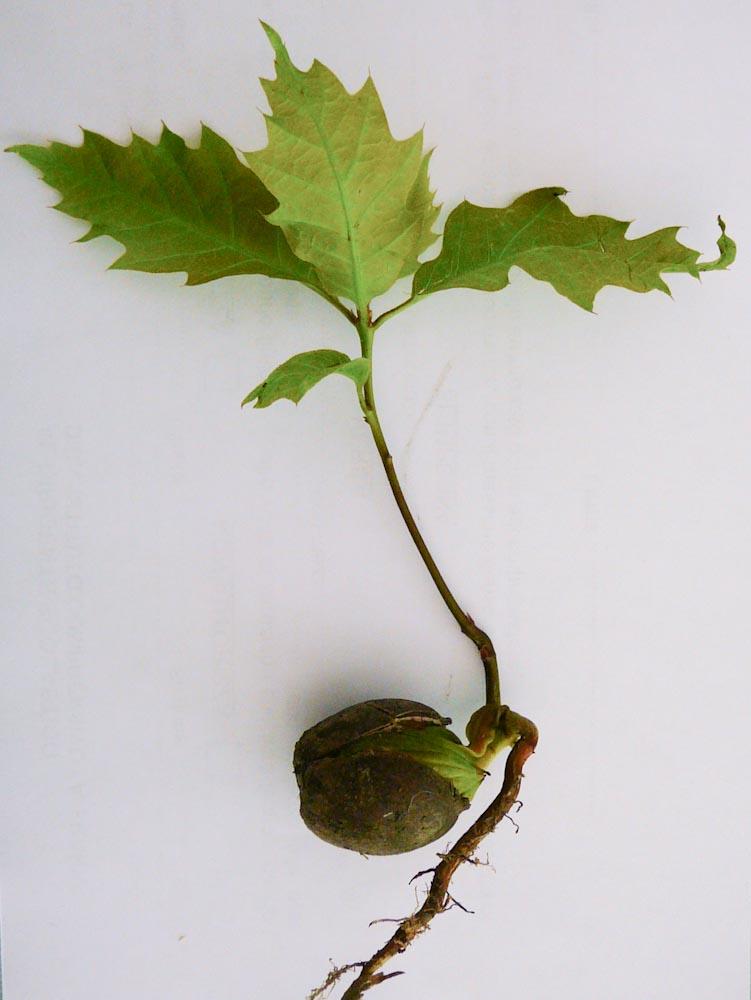 La breda in rete botanica in giardino piante ed arbusti for Rete con foglie finte