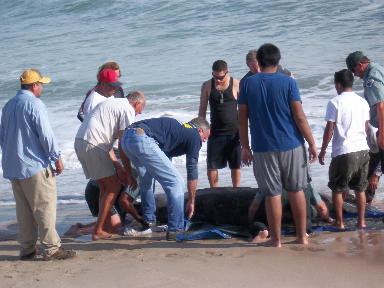 ty and ida on the road the treasure coast the ocean waters still continue to yield other treasures like a recent manatee rescue that we were a part of look for ty helping in the picture to the