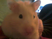 Bella the hamster - RIP
