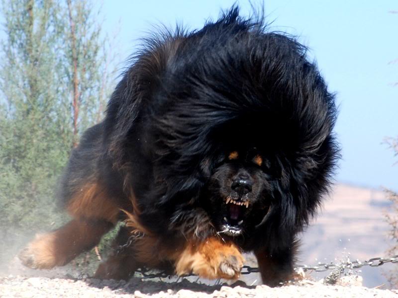 intimidating dog names male