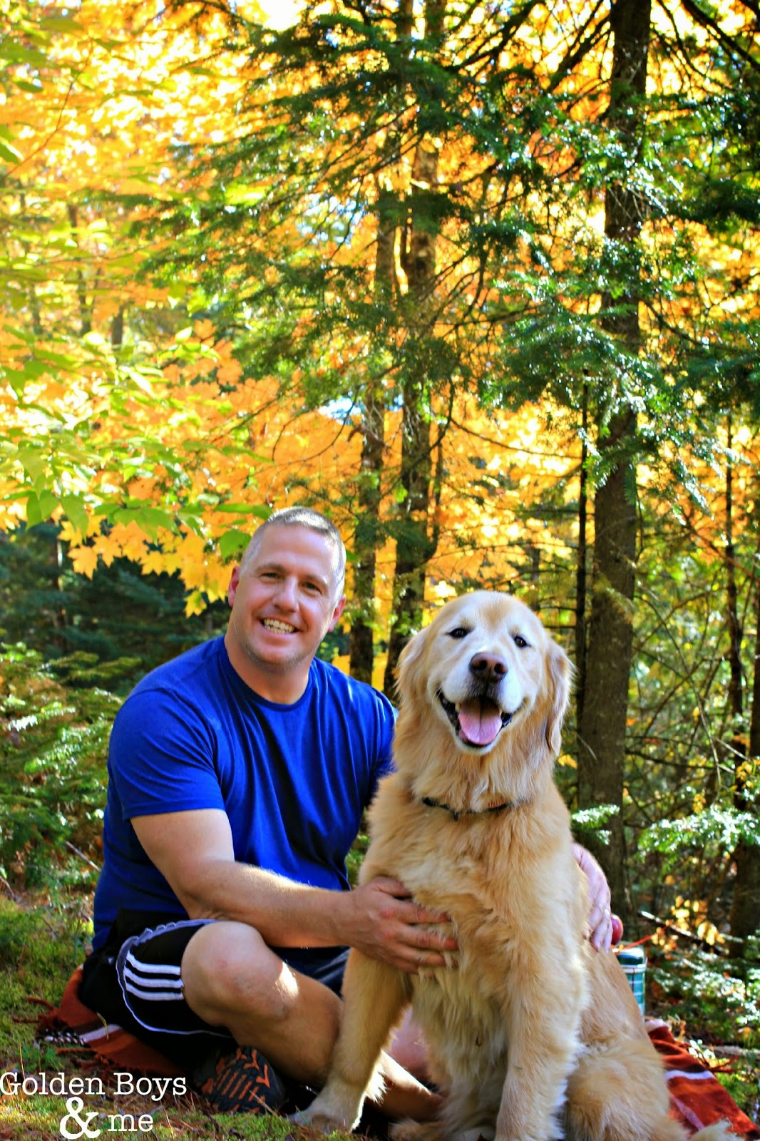 Golden retriever at an Autumn picnic-www.goldenboysandme.com