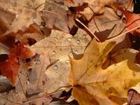 Paroles et silences d'automne