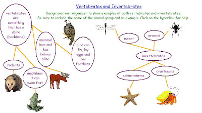 Into two groups vertebrates and invertebrates vertebrates are animals