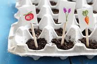 Piantare i semi delle piantine