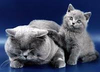 Кішки та коти все про кішок та котів