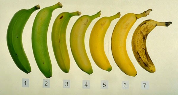 Kích thước dương vật thế nào là chuẩn?